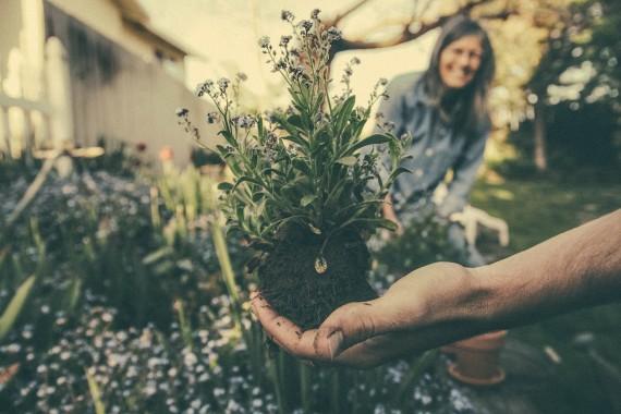 Velký průvodce: Jak na zahradní projekt